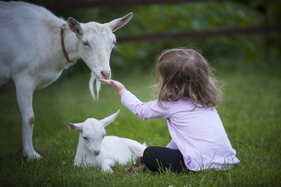goat-3017394_960_720